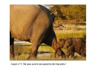 Leçon n°1: Ne pas suivre ses parents de trop près !
