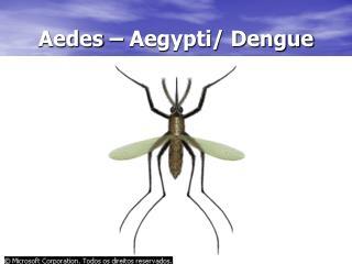 Aedes � Aegypti/ Dengue