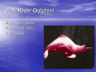 Pink River Dolphin!