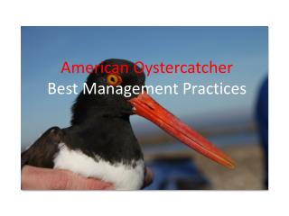 American Oystercatcher  Best Management Practices