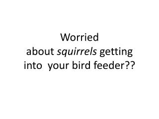 Worried about  squirrels  getting into  your bird feeder??