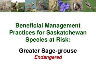 Beneficial Management Practices for Saskatchewan Species at Risk: Greater Sage-grouse Endangered