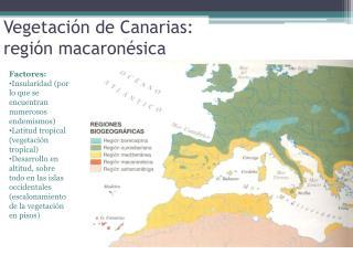 Vegetaci�n de Canarias:  regi�n  macaron�sica