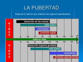 LA PUBERTAD