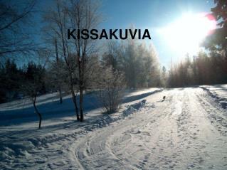 KISSAKUVIA