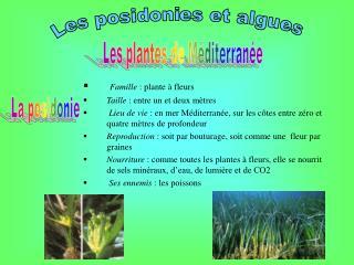 Famille  : plante à fleurs Taille  : entre un et deux mètres