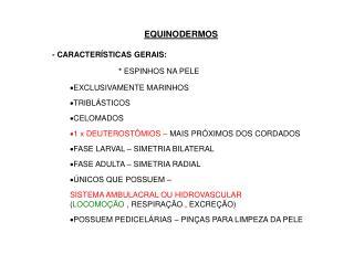EQUINODERMOS - CARACTERÍSTICAS GERAIS:                               *  ESPINHOS NA PELE