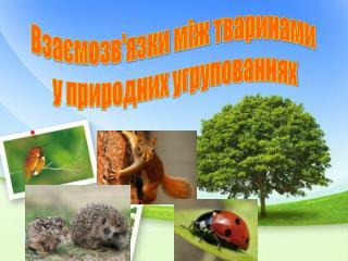 Взаємозв'язки між тваринами  у природних угрупованнях