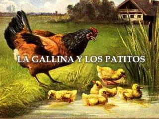 LA GALLINA Y LOS PATITOS