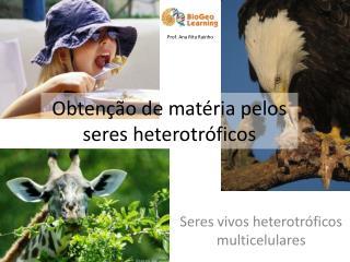 Obtenção de matéria pelos seres heterotróficos
