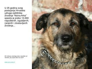 Alf, križanac srednjeg rasta, napušten od vlasnika, još uvijek čeka novi dom! noina-arka.hr
