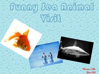 Funny Sea Animal Visit