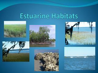 Estuarine Habitats