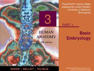 Basic Embryology