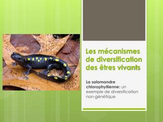 Les mécanismes de diversification des êtres vivants