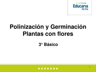 Polinización y Germinación  Plantas con flores