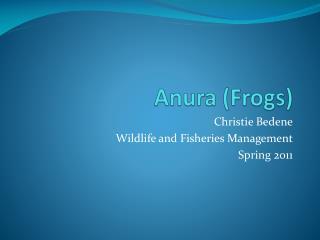 Anura (Frogs)