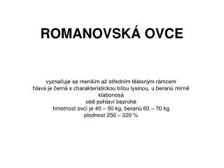 ROMANOVSKÁ OVCE