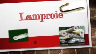 Lamproie