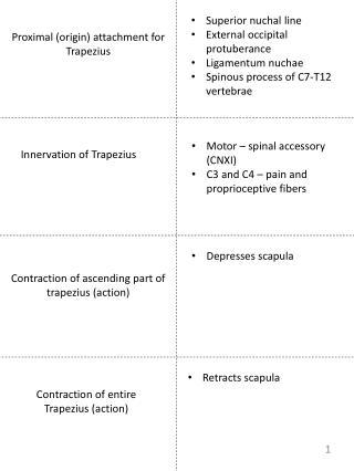 Proximal (origin) attachment for Trapezius