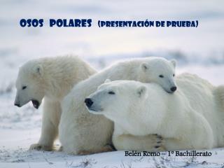 OSOS   POLARES    (Presentación de prueba)