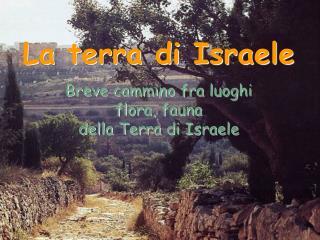 La terra di Israele Breve cammino fra luoghi flora, fauna della Terra di Israele