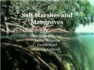 Salt Marshes and Mangroves