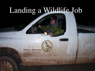 Landing a Wildlife Job