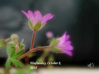 Wednesday, October 8, 2014