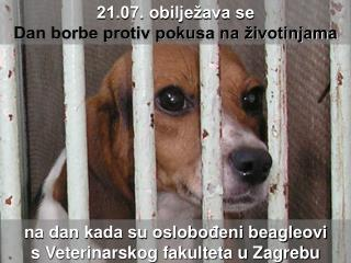 na dan kada su oslobođeni beagleovi  s Veterinarskog fakulteta u Zagrebu