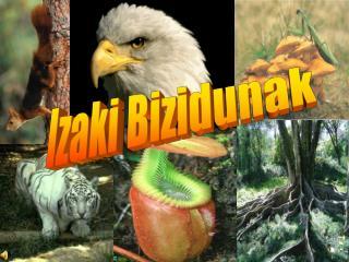 Izaki Bizidunak