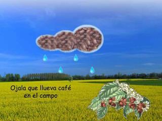 Ojala que llueva café en el campo