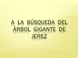 A  LA  BÚSQUEDA  DEL  ÁRBOL  GIGANTE  DE  JEREZ