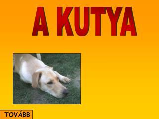 A KUTYA