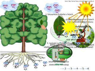 Čo potrebujú rastliny na fotosyntézu: