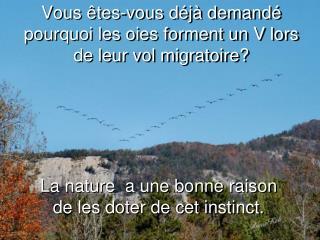 Vous êtes-vous déjà demandé pourquoi les oies forment un V lors de leur vol migratoire?