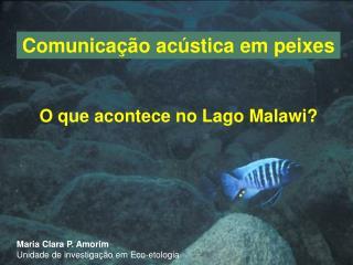 Comunicação acústica em peixes