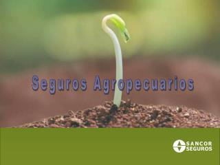 Seguros Agropecuarios