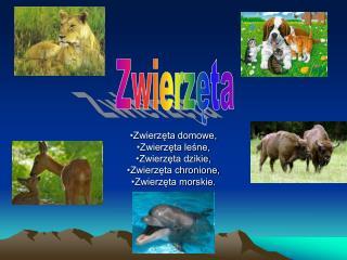 Zwierzęta domowe, Zwierzęta leśne, Zwierzęta dzikie, Zwierzęta chronione, Zwierzęta morskie.
