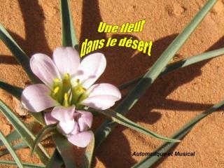 Une fleur dans le désert