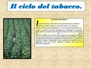 Il ciclo del tabacco.