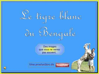 Le tigre blanc du Bengale