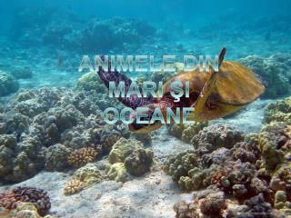 ANIMELE DIN MĂRI ŞI OCEANE