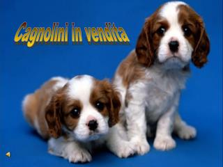 Cagnolini in vendita