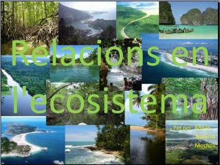 Relacions en l'ecosistema
