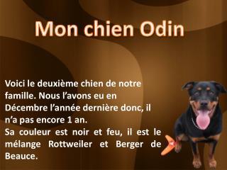 Mon chien Odin