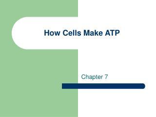 How Cells Make ATP