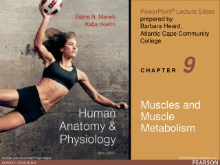 Muscles and Muscle Metabolism