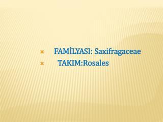 FAMİLYASI: Saxifragaceae   TAKIM:Rosales