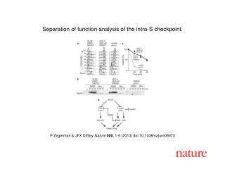 P Zegerman & JFX Diffley  Nature 000 , 1-5 (2010) doi:10.1038/nature09373